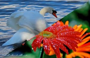 copertina-flora_fauna